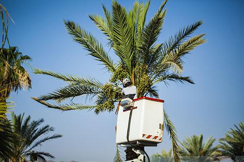 tree service san jose california