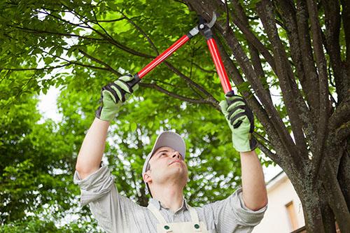 city of san jose tree trimming